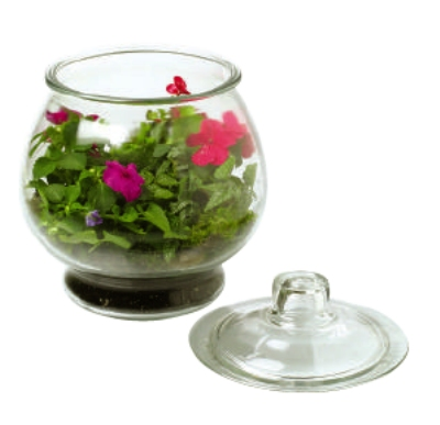 Anchor 89194R2 128-oz Terrarium, Crystal