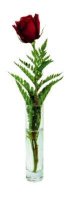 Anchor 89465 Cylinder Bud Vase, Crystal