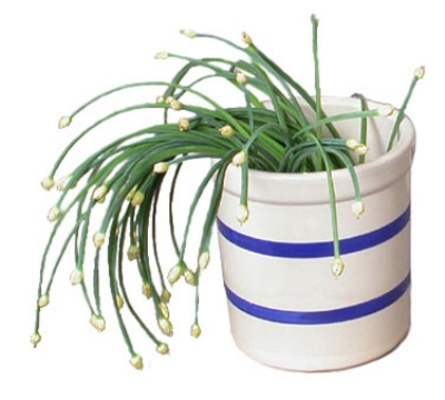 Town 2714 1 qt Ceramic Crock, With Two Blue Stripes, 4-1/2 in